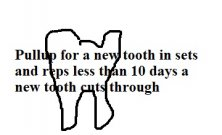 Where no tooth is. Pull gums tooth up, using your index finger and thumb. pull gums tooth up,