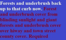 Forests and underbrush back up to that curb now. Forest and underbrush cover from blinding sunlight and giant forests and underbrush cover over hiway Political.